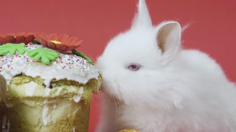 Easter bunny on red background tastes easter cake with colored eggs