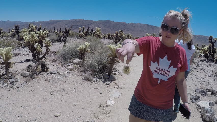 Blonde adult female holds a dangerous jumping cholla cactus on her finger at the Cholla Cactus Garden in California's Joshua Tree National Park
