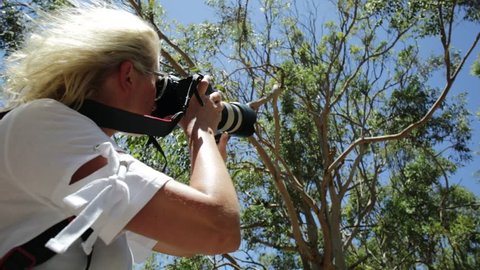 Wildlife woman photograph taking pictures of a Koala sleeping on an eucalyptus tree in Yanchep National Park, Western Australia. Travel female photographing a Koala on a tree.