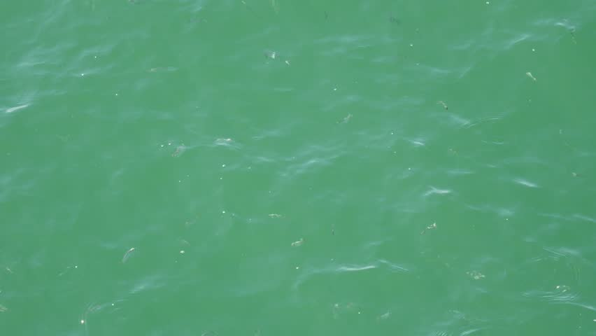 High-angle full frame shot of the sunny rippled surface of the sea water with fish swimming inside