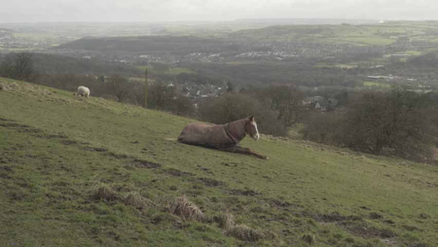 Horse laying down in a field stock footage. A brown horse resting in a field in the countryside.   Shutterstock HD Video #1006817332