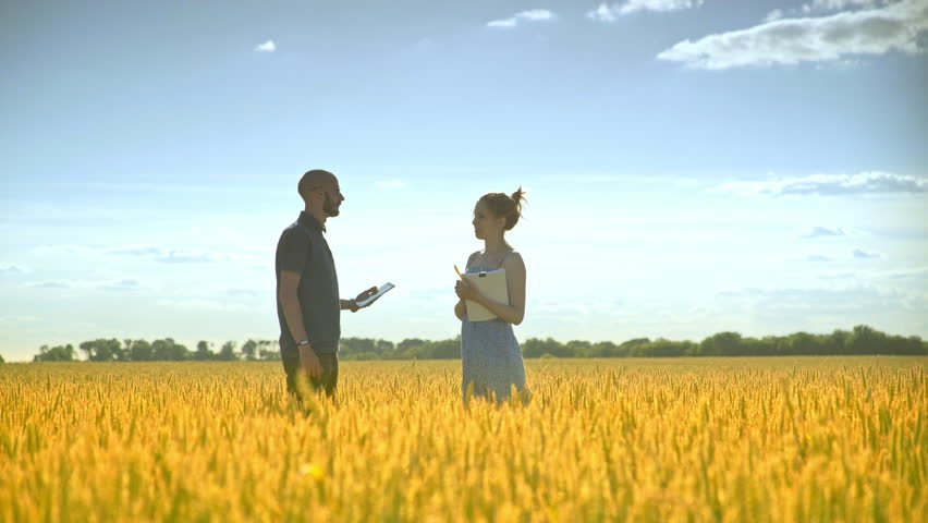 Agro farmer analyzing wheat ears with female agronomist. Agricultural scientist working in harvest field. Agriculture research. Man and woman with documents in wheat field | Shutterstock HD Video #1006856992
