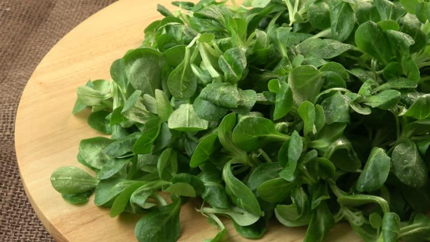 Fresh lamb lettuce corn salad on wooden table. Green lettuce leaves (Valerianella locusta)