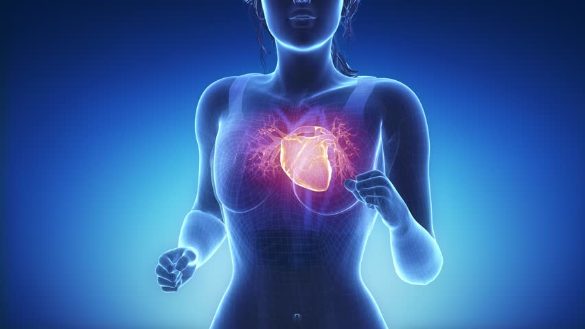Stock video of female heart anatomy in blue x-ray | 1332481 ...