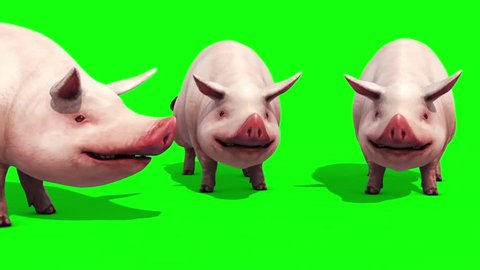 Group of Pigs Animals Farm Eating Green Screen 3D Renderings Animations