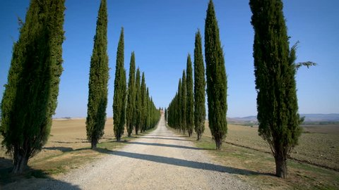 Slow motion stabilized shot - Famous cypress trees row along Tuscany road by POV of car driver driving along countryside of Italy. Cypress tree defines signature of Tuscany for tourist visiting Italy.