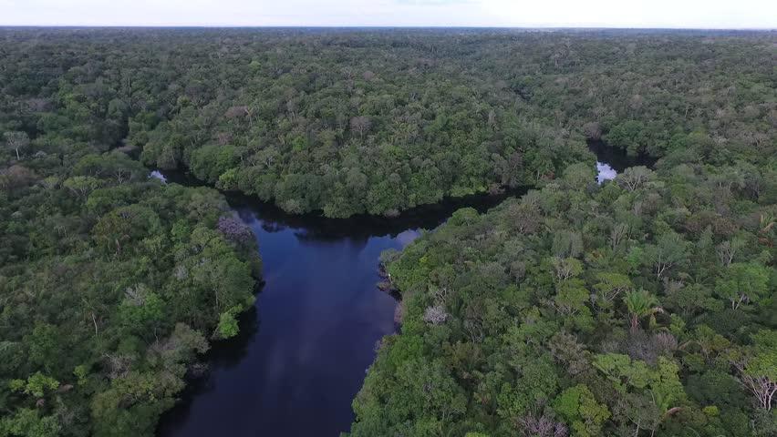 Aerial view of Amazonia Forest, near Negro River. Novo Airão, Amazonas, Brazil.