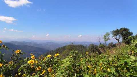 Asian mountains, UHD pan view of wind shaking flowers at kiew lom viewpoint, on a sunny autumn day, in the mountainsn near Pai, in Thailand