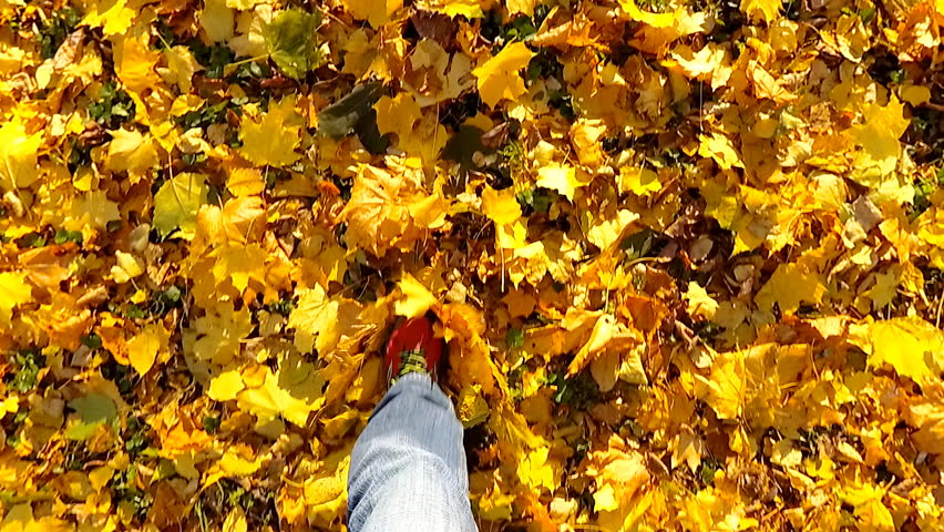 Point of view camera filming. Man walking on a autumn leaves in a Central park. Slow motion. | Shutterstock HD Video #1007397082