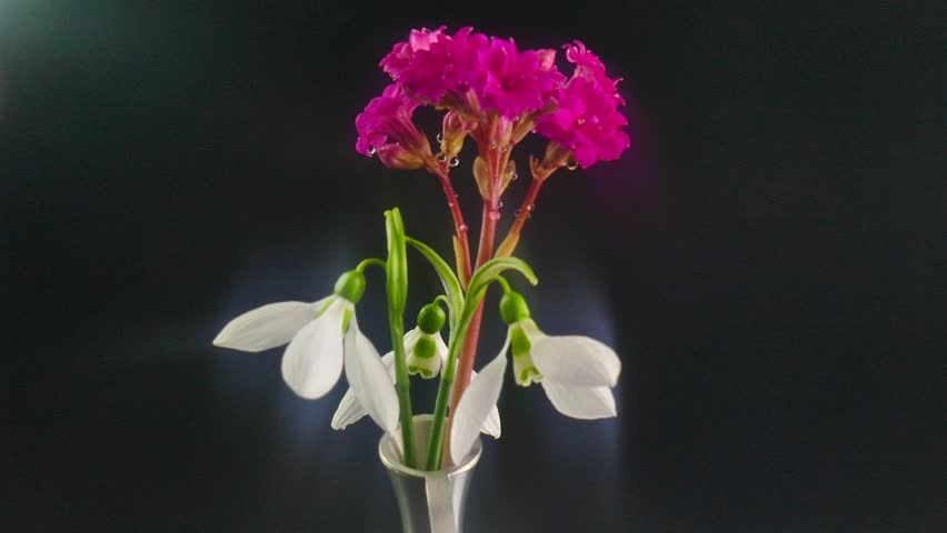 Blooming pink, flower kalanchoe. Relocation of focus in without focus.