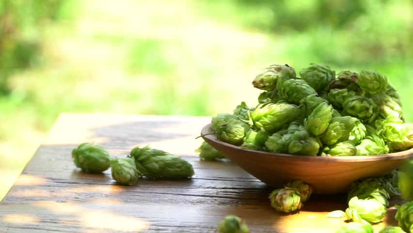 Hops falling into wooden spoon with plantation in background.  | Shutterstock HD Video #1007507032