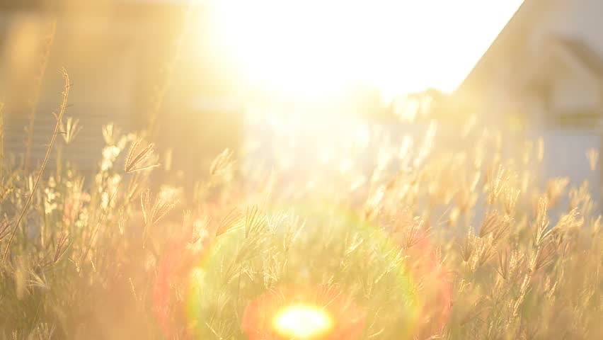lens flare over the grass in nature with warm tone #1007516302