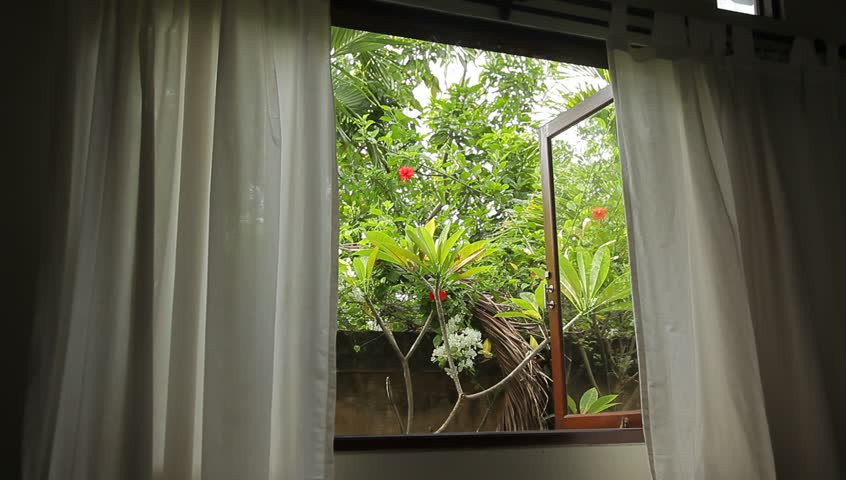 View Of The Tropical Garden From Window Curtains Palm Trees And Plants Swinging In Strong Wind