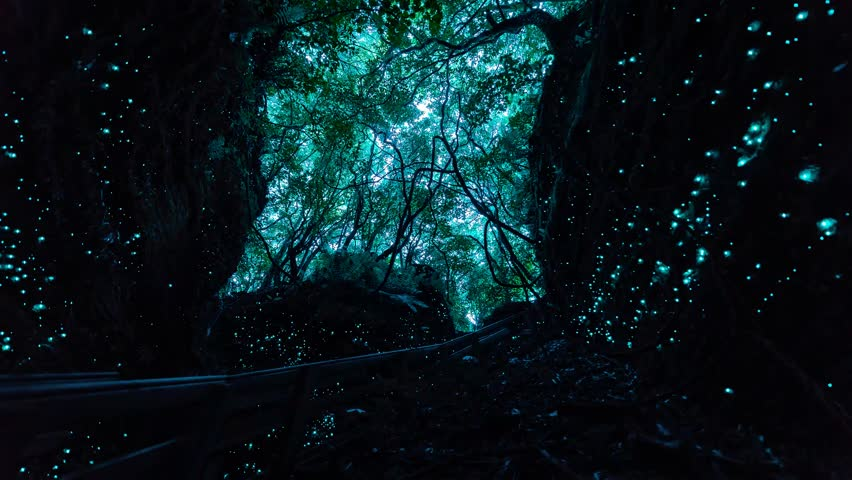 Day to night time-lapse of bush canopy and stairwell to glow worm cave