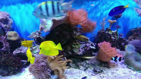 Underwater world, water world, fishes and plants