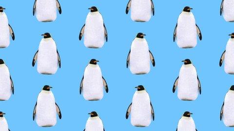 Minimal Motion art. Penguin background