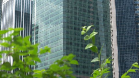 CLOSE UP Contemporary glassy skyscrapers behind rustling green tree leaves in big city. Urban apartment buildings looking over green park in downtown of metropolitan city. Tree leaves waving in wind.