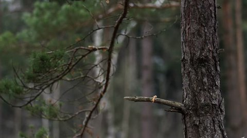 hawk catches his prey in a forest and scuffs it down