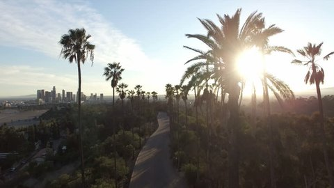 Sun shining through palms in drone clip of Los Angeles