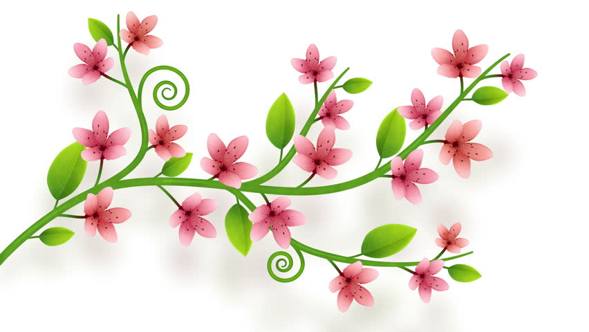 Growing flower ornament on white background with alpha | Shutterstock HD Video #1008287332