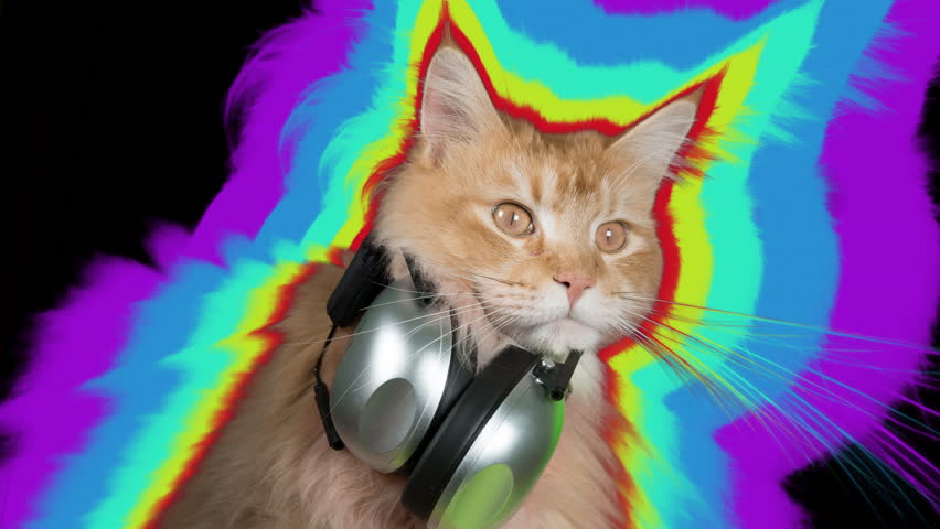 beautiful cool disco cat with headphones. this cutout version has the cat bouncing around like he is dancing
