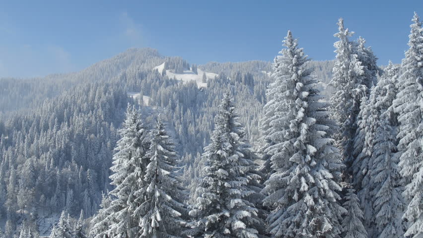 Aerial view of a fresh snowy landscape and snowy fir trees in Langis in the Alps of Switzerland | Shutterstock HD Video #1008337222
