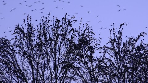 4K birds fly into a tree and fly out fast 4K winter England
