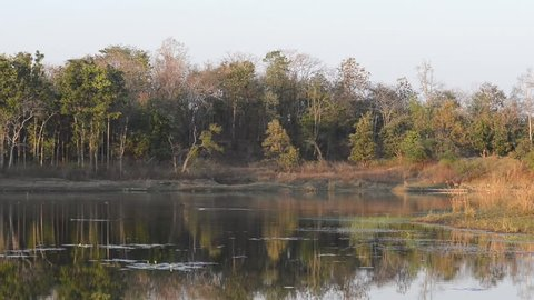 forest landscape with lake in national park in India
