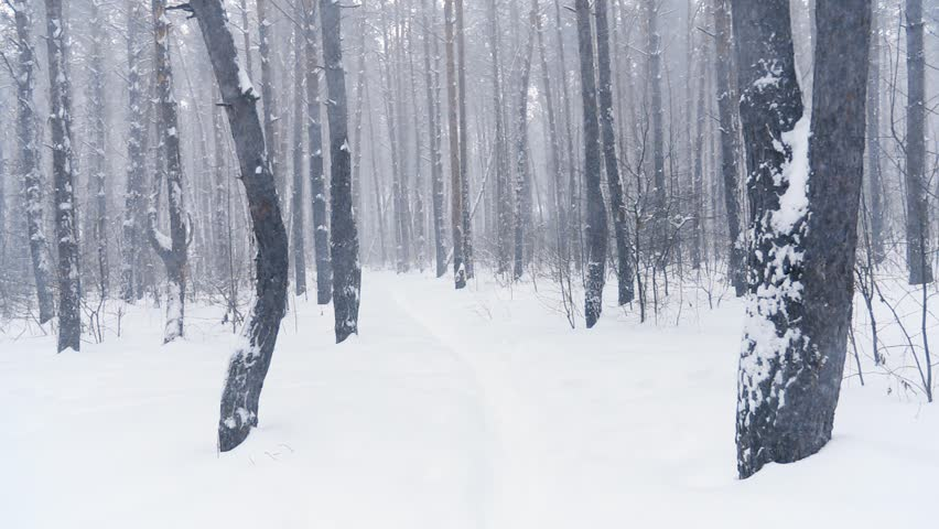 Falling snow in the winter forest with snow-covered trees, slow motion