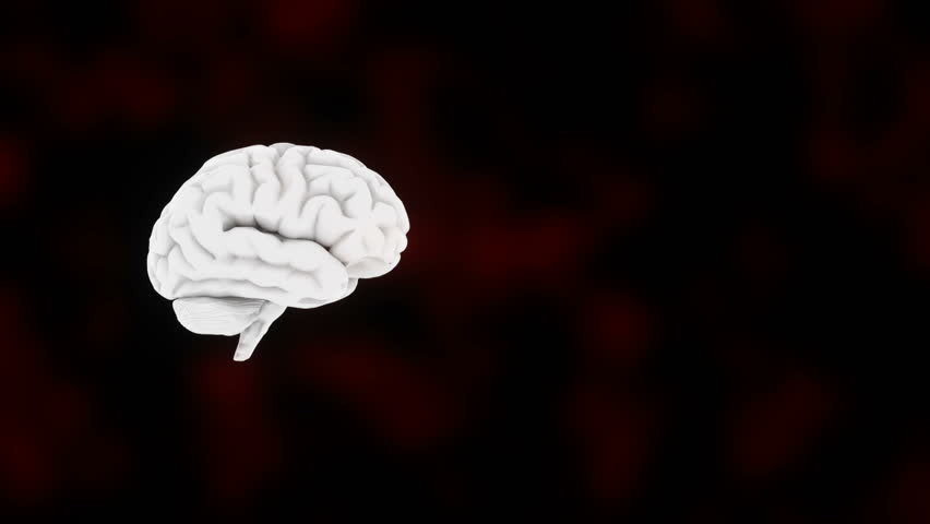 3d Render Of Human Brain Anatomy Stock Footage Video 24347864