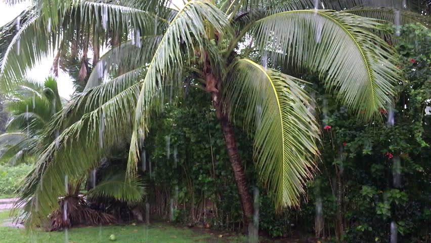 Tropical storm, wet and rainy season in Rarotonga, Cook Islands. The wettest month in Rarotonga is January with an average of 190mm of rain.