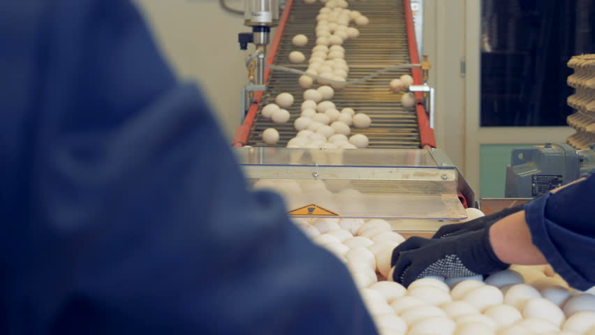 Two factory workers are picking up the eggs which came down from the conveyor belt | Shutterstock HD Video #1008964532