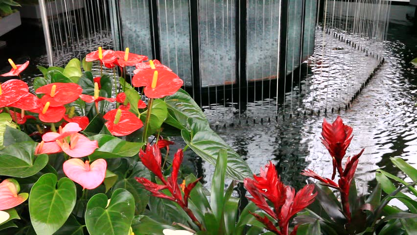 Bright tropical anthurium   and guzmania flowers near the fountain in Keukenhof garden, Holland