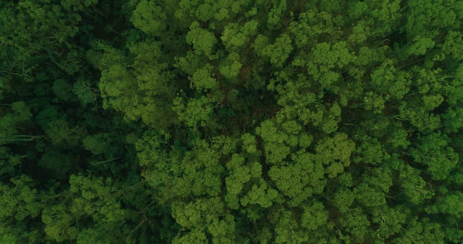 Tree canopy from above. 4K Australia | Shutterstock HD Video #1009076312