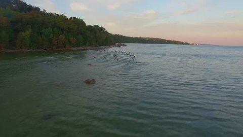 Gental orbit shot around geese on Lake Michigan at dusk.