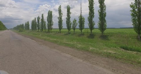 View from the window of the car on agricultural fields and level poplars along the road