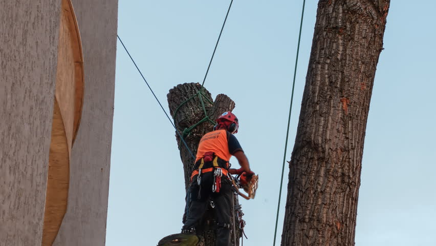Certified Arborist Climbing On a Stock Footage Video (100% Royalty-free)  1009318232 | Shutterstock
