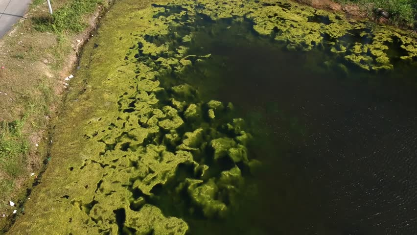 Moss Video/ footage close up and moving inside green water. | Shutterstock HD Video #1009571102