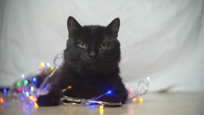 Black cat with a Christmas garland. 4k, slow motion | Shutterstock HD Video #1009708652