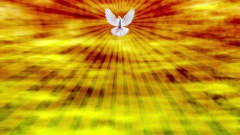 White Dove Religious Holy Spirit Motion Background