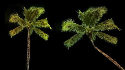 Palm trees isolated with alpha mask and luminance matte on clean background.
