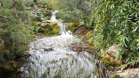 Waterfall in botanic garden - Dublin