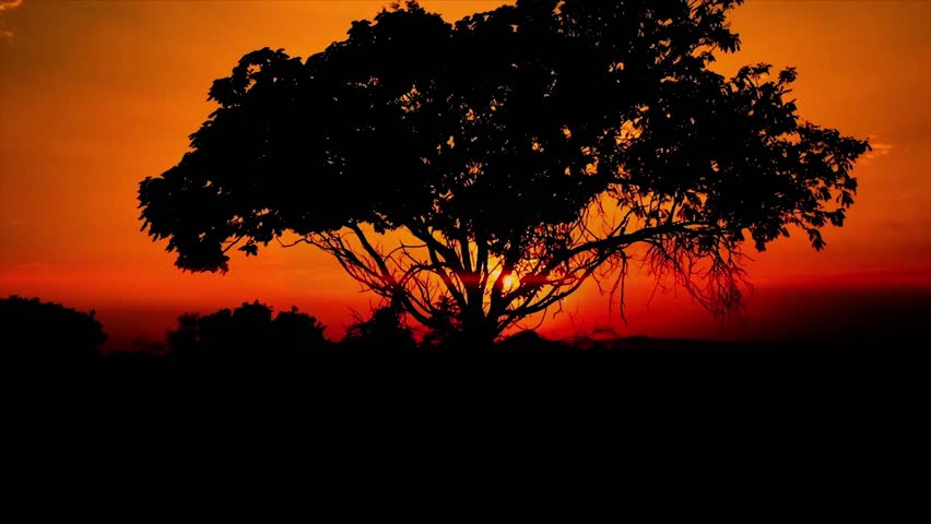Tilt-up shot of silhouetted tree against sky during sunset, South Africa or Sunrise Horizon with Foreground Tree