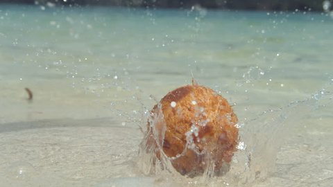 SLOW MOTION, LOW ANGLE, CLOSE UP: Coconut drops from palm tree and into shallow water near sunny tropical island, sending water droplets flying everywhere. Coconut falls on beautiful white sandy beach