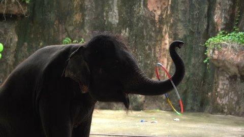 elephant playing hula hoop