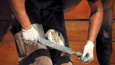 Close up of a farrier using a rasp to flatten and level the the sole of a horse.