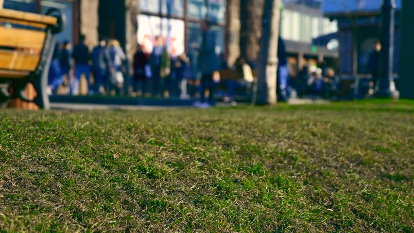 Word SALE On Shop Window. Spring New Green Grass On Urban Green Space. People Walking Crowd On City Street   Shutterstock HD Video #1010116172
