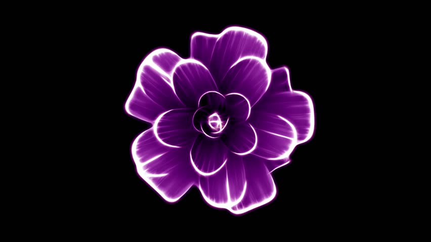 Opening long blooming purple flower time-lapse 3d animation isolated on background new quality beautiful holiday natural floral cool nice 4k video footage