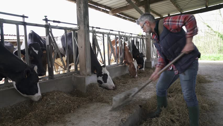Stockbreeder feeding cows  | Shutterstock HD Video #1010236232