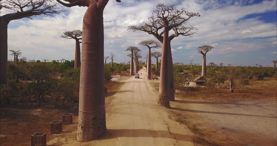 Aerial view of green fields of Madagascar, baobabs, endless gravel roads and African rivers. Concept of: vacations, travel, adventure, safari and Africa